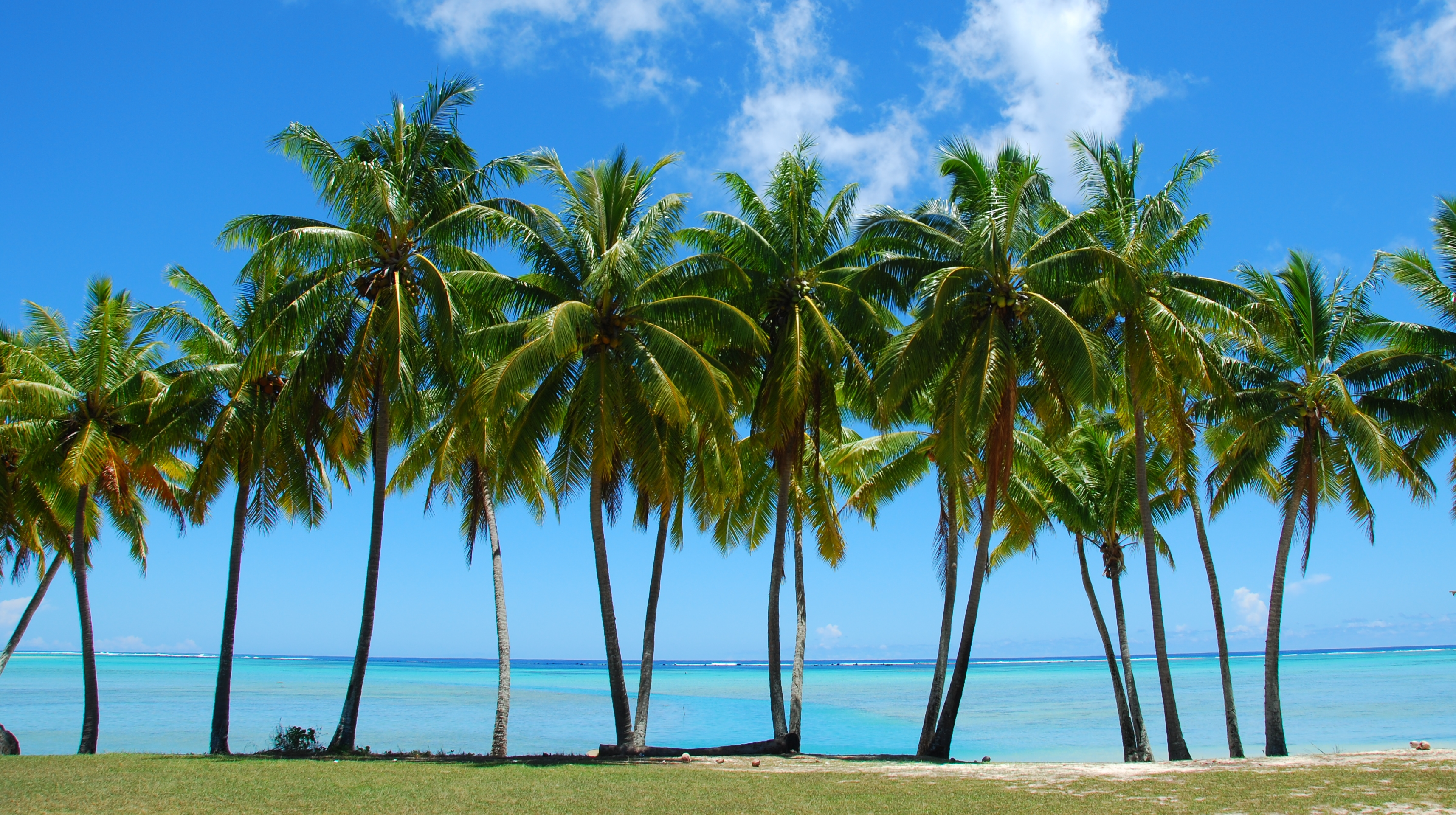 palm-trees-beach